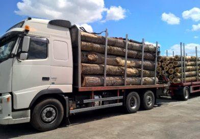Lemne confiscate de Scutul Pădurii. Polițiștii au găsit 52 de metri cubi transportați ilegal.