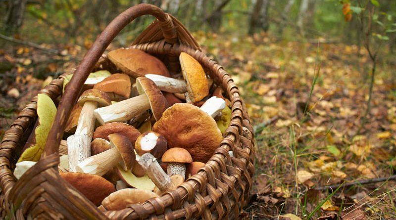 Atenție la ciuperci! Simptomele care anunță intoxicația