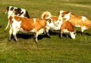 Controale la fermele de animale din Alba