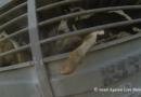 EXPORTUL DE ANIMALE VII DIN ROMÂNIA A EXPLODAT ÎN POFIDA DEZASTRULUI DE LA MIDIA